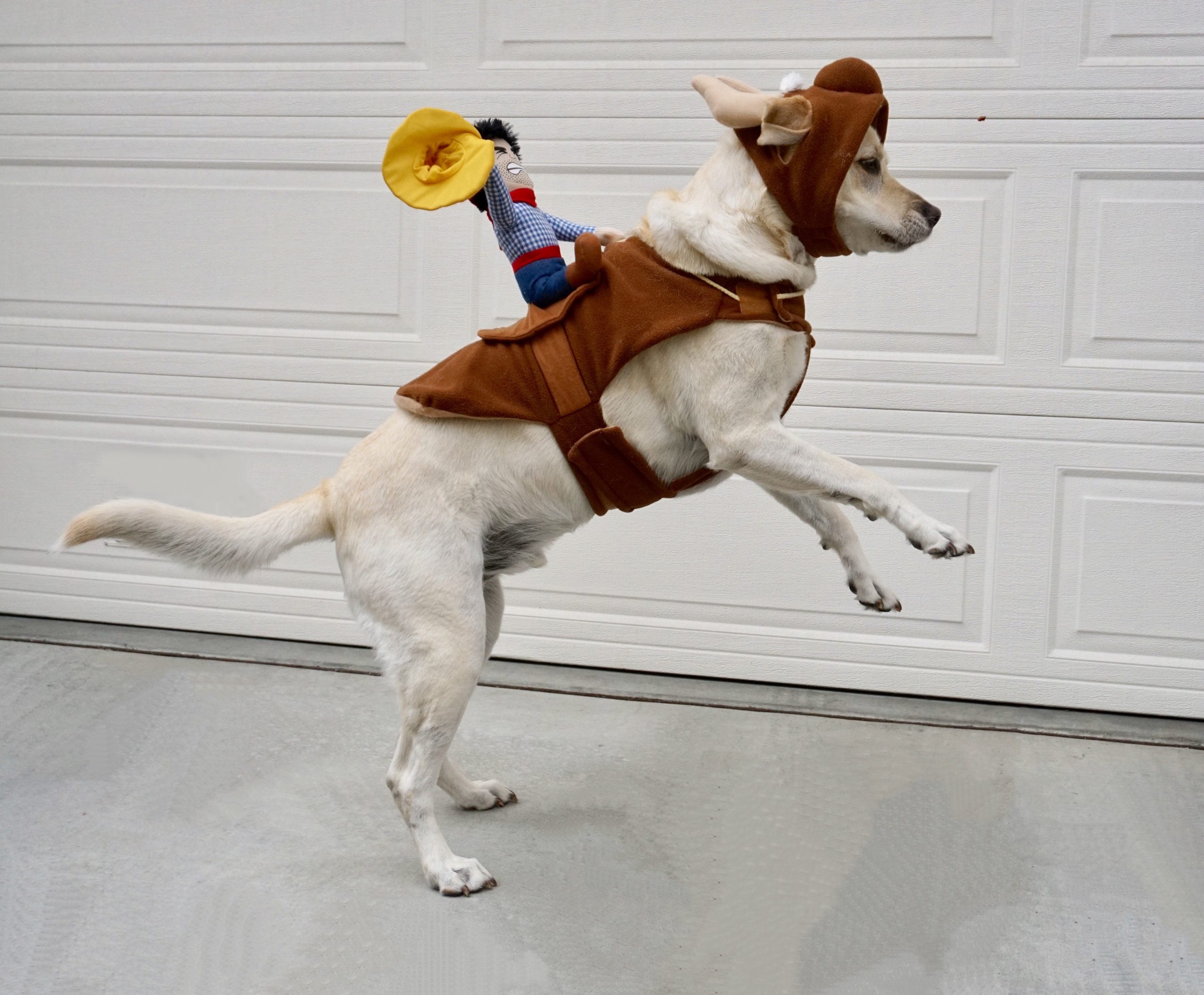 Dog with miniature cowboy on its back